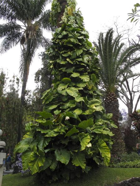 Funchal jardin Joao Francisco