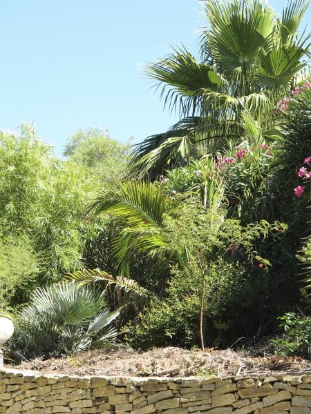 Jardin d'arbustes