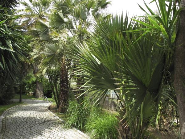 L'allée aux palmiers