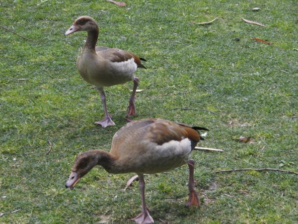 Lisbonne parc Palhava
