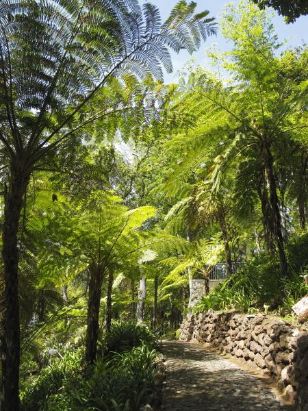 Madère, jardin du Monte Palace
