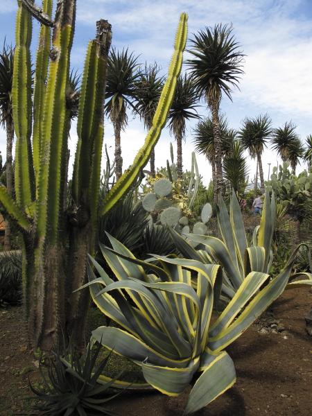 Jardin botanique de mad re jardinsud for Jardins exceptionnels
