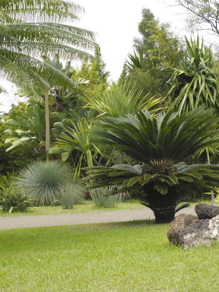 Madère jardin botanique cycadales palmiers