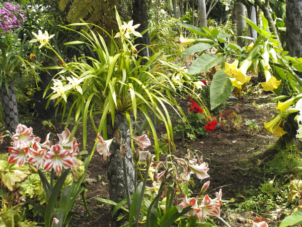 Madère, jardin du Monte Palace, jardin d'orchidées
