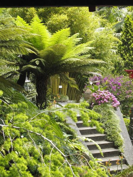 Madère, jardin du Monte Palace, jardin oriental