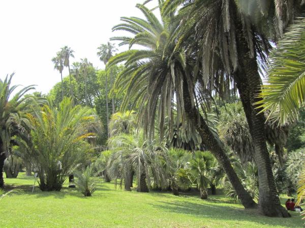 Phoenix jardin botanique Rome