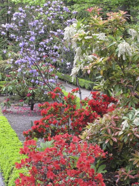 Rhododendrons et Pieris