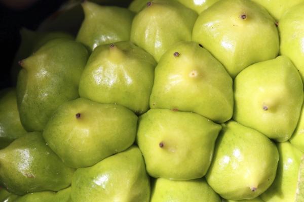 Zantedeschia aethiopica, fructification