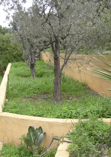 Le jardin provençal à l'origine