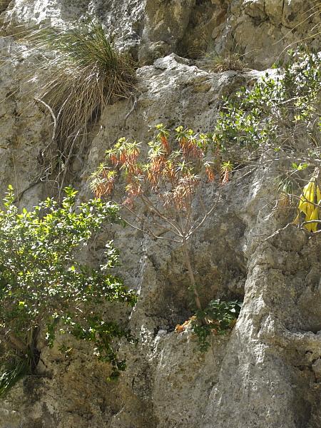 Végétation Torrent de Pareis