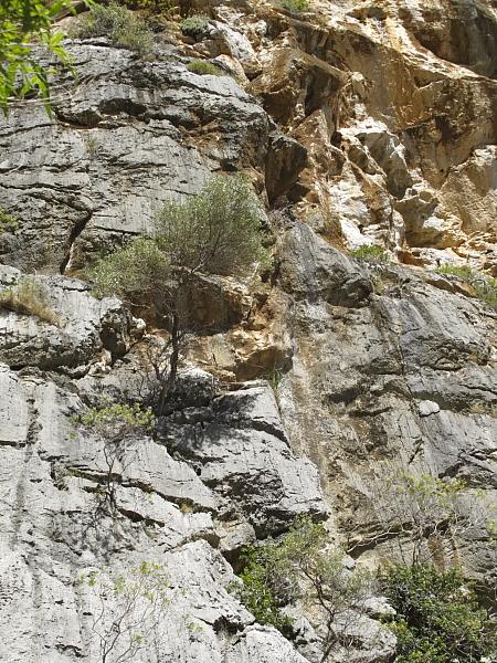 Végétation sur rocher à Torrent de Pareis