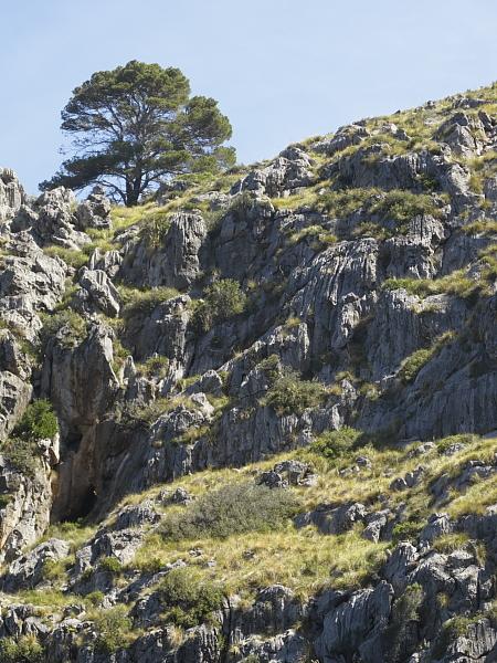 Végétation sur rocher