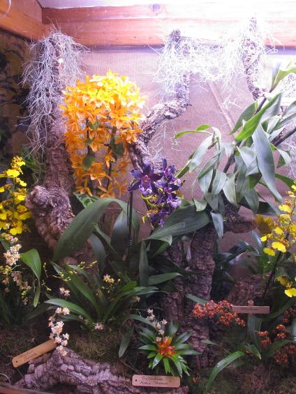 Le festival des orchidées