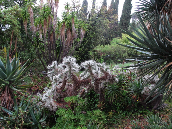 Jardin Handbury